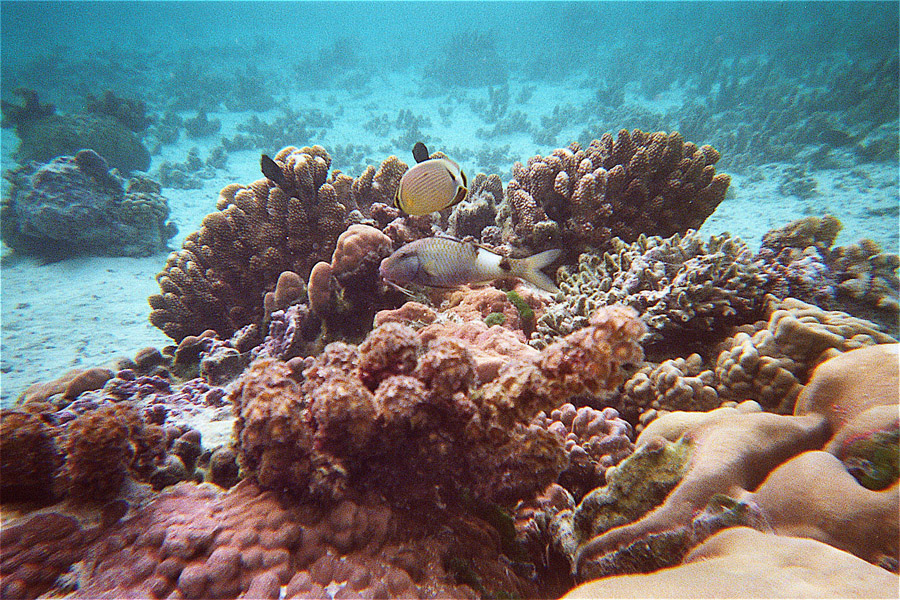 Tahaa. le jardin de corail